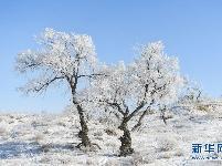 锡林郭勒草原冬日美景