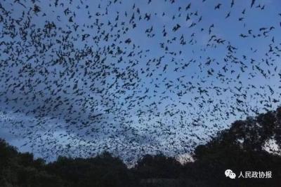 """家里飞进蝙蝠会被传染病毒吗?我们该如何与野生动物""""和平共处""""?"""