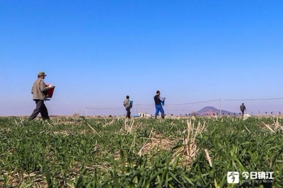 """推行""""不见面""""审批和网上通办  市农业农村局构建""""绿色通道""""助力农业生产"""