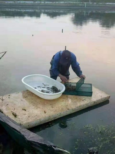 宝堰十多万公斤河虾滞销   上百虾农愁白头向外呼救