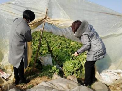 京口区农业农村局助力农户解决蔬菜滞销难题