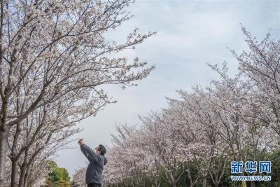武汉无疫情小区居民可在小区内进行非聚集性个人活动