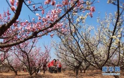 未来三天江苏全省以晴好天气为主,明晨沿淮和淮北地区有霜冻