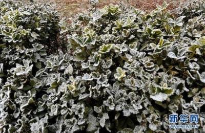 江苏气象发布霜冻报告,未来三天多阴雨天气