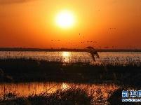 卧龙湖湿地迎来大批候鸟