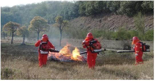 安全防線筑得牢 清明全市未發生森林火情