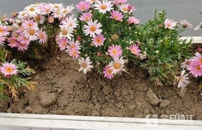 手真黑!短短半个月,S241丹阳河阳高速出入口处被盗200余盆花卉