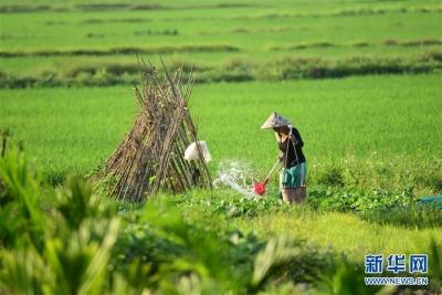 2019年农民工总量达到29077万人 月均收入3962元