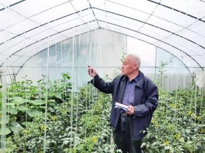 """平均年龄70岁,成员均获得国家、省、市各级劳模称号  这群""""银发劳模""""在屋顶建菜园"""