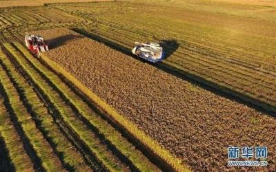丹徒推进粮食生产全程机械化成效如何 一组数据来了