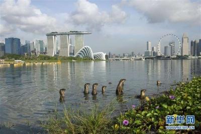 新加坡将拨款200亿新元用于科研计划