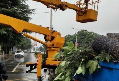 暴雨之下丹阳城区百余处树木倒伏,丹阳园林部门紧急处理