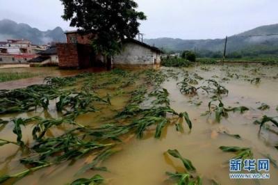 洪涝灾害已致江西37.8万人受灾