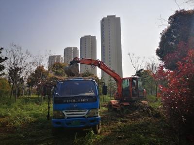 12万平方米绿化整治,新区园区又升级