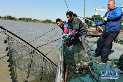 十年禁捕:江苏长江禁渔令行禁止