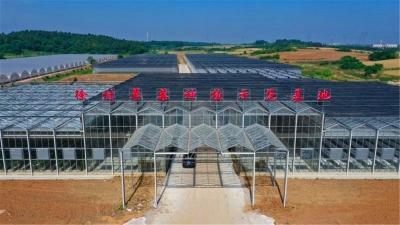 """江苏句容:物联网让大棚更""""智慧"""",徐村草莓基地颠覆传统种植"""