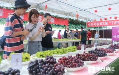 句容4万亩葡萄成熟  20多个品种138个样品葡萄打擂台