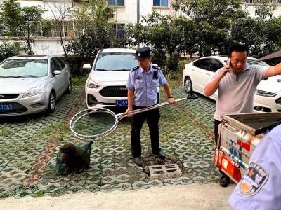 护航开学季 镇江新区公安犬管中队在行动