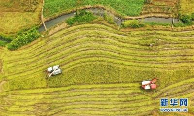 省政府办公厅出台意见 加强高标准农田等农业基础设施建设