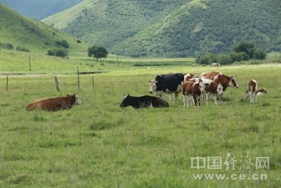 【幸福花开新边疆】合作社里的致富人 绘就草原最美底色