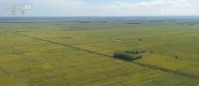 """台风""""巴威""""对东北秋粮生产影响总体有限"""
