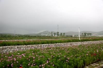 幸福花开新边疆 石头上种花 废弃采石场成景区