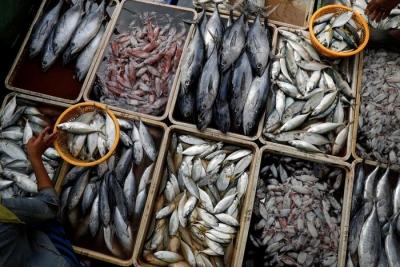 海关总署:从印尼进口的冻带鱼外包装检出新冠病毒