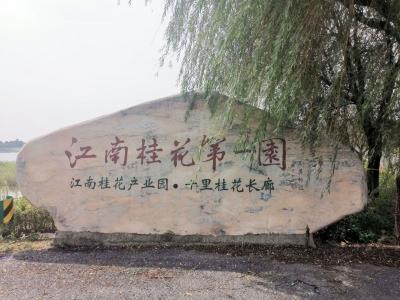 【走向我们的小康生活】江苏溧阳上兴镇:护得青山好,财源滚滚来