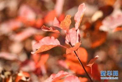 金海湖红叶节开幕