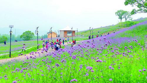 发展绿色农业 打造宜居乡村