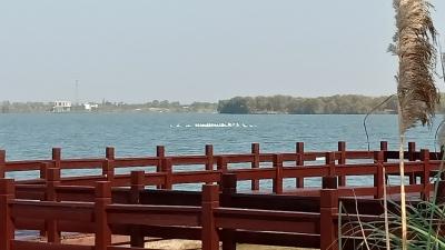 """60只 """"歇脚"""" 4小时后飞离! 句容赤山湖发现最多一批小天鹅过境"""