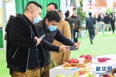 海南冬交会农产品订单总额达678亿元