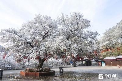 """雪后放晴,茅山银装素裹似""""仙宫"""""""