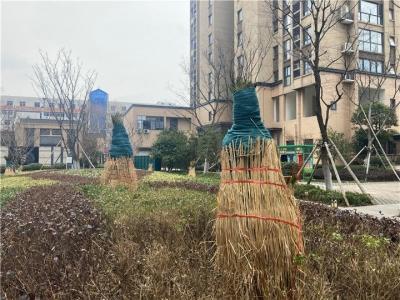 """苗木""""穿衣涂白修发型""""  城市绿化应对新一轮寒潮"""