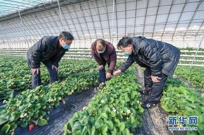 财政部拨付17.5亿元农业生产和水利救灾资金