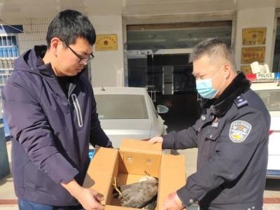 夜鹭折翼受伤 扬中警民接力救助