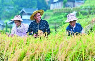 透视小种子背后的大战略——一国粮食安全,系于种质资源