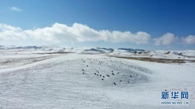 雪后草原美