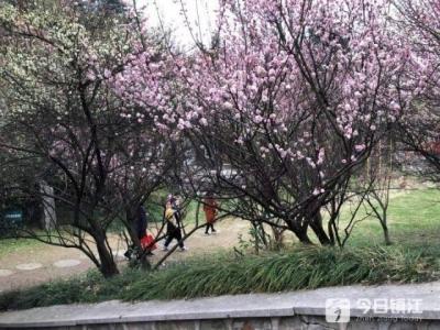 踏青赏花,赴一场春天的约会