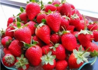 """句容白兔:新春牛市开启""""莓""""好时光"""