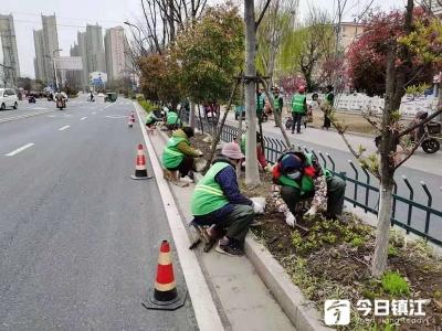"""丹阳园林部门打响""""春季苗木补植补栽""""第一战"""