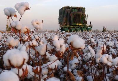 新疆棉花,不缺訂單
