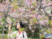 2021武汉东湖樱花节开幕