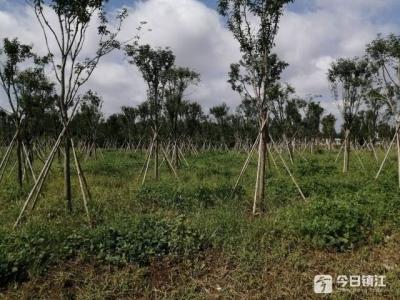 造林绿化显成效 长江京口段两岸风景美如画