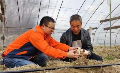 丹阳访仙镇:一朵赤松茸,撑起一方群众致富伞
