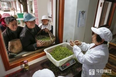"""镇江茶乡""""金凤凰""""付玉香:带着茶农一起干,成绩写在茶园里"""