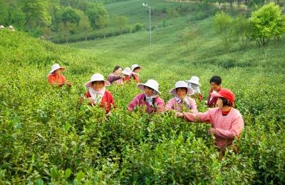 林隱茶博園茶文化體驗好去處
