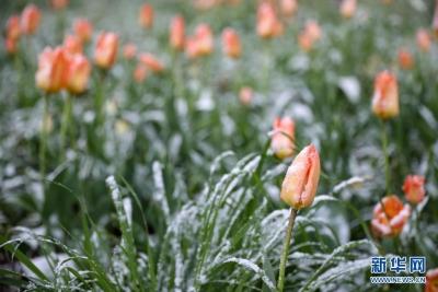 比利時布魯塞爾迎春雪