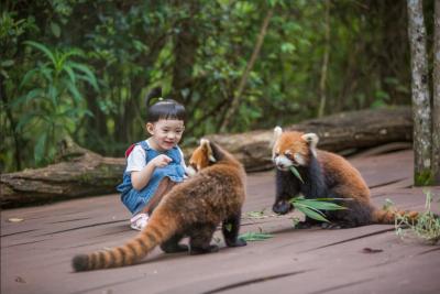 【沿著高速看中國】普洱國家公園:打造一站式森林旅游目的地