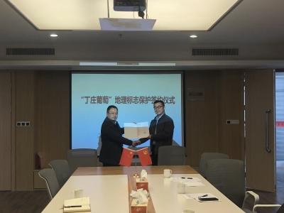 """""""丁庄葡萄""""地理标志保险落地镇江句容"""